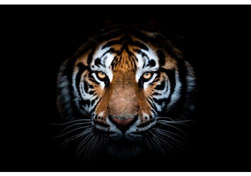 Dutch Art Explosion Tiger king