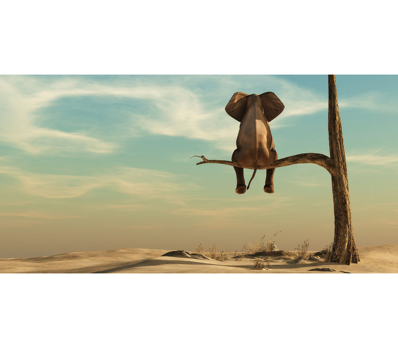 The life of an elephant