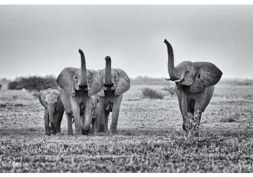 Dutch Art Explosion Happy elephants
