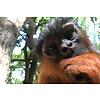 Dutch Art Explosion Curious monkey