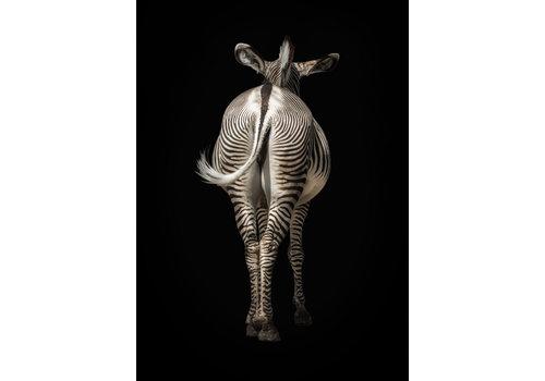 Dutch Art Explosion Zebra