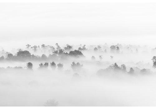 Dutch Art Explosion Fog in nature