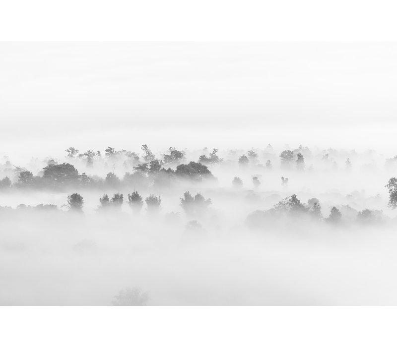Fog in nature