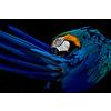 Dutch Art Explosion Beautiful parrot