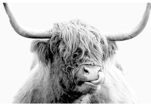 Dutch Art Explosion Highland cow