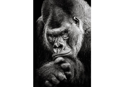 Dutch Art Explosion Gorilla