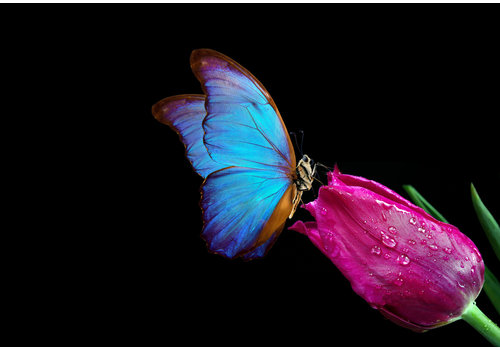 Dutch Art Explosion Butterfly love