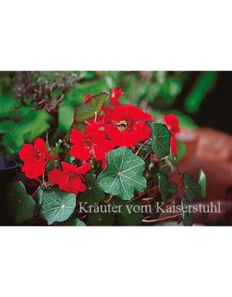 Kapuzinerkresse 'Red Wonder' - Tropaeolum majus
