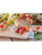 Litschi-Tomate (Solanum sysimbriifolium)