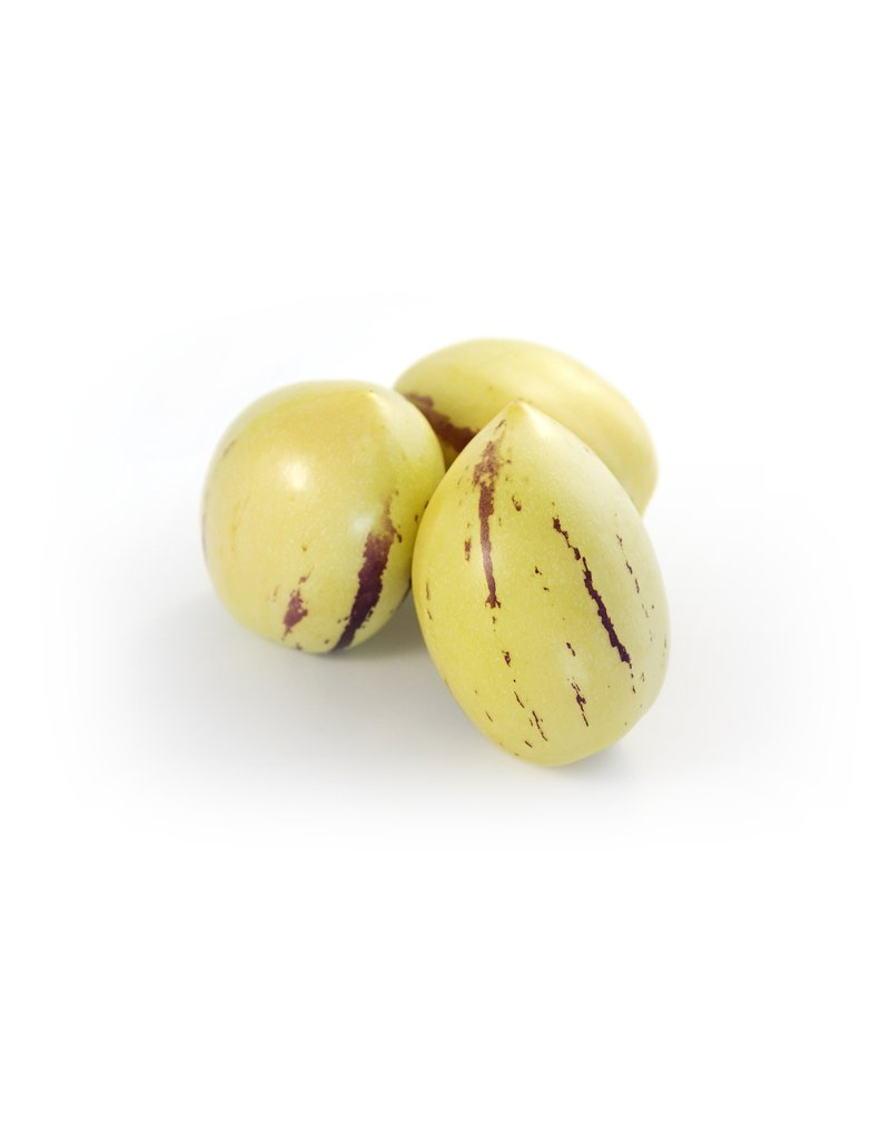 Pepino, Melonenbirne (Solanum muricatum)
