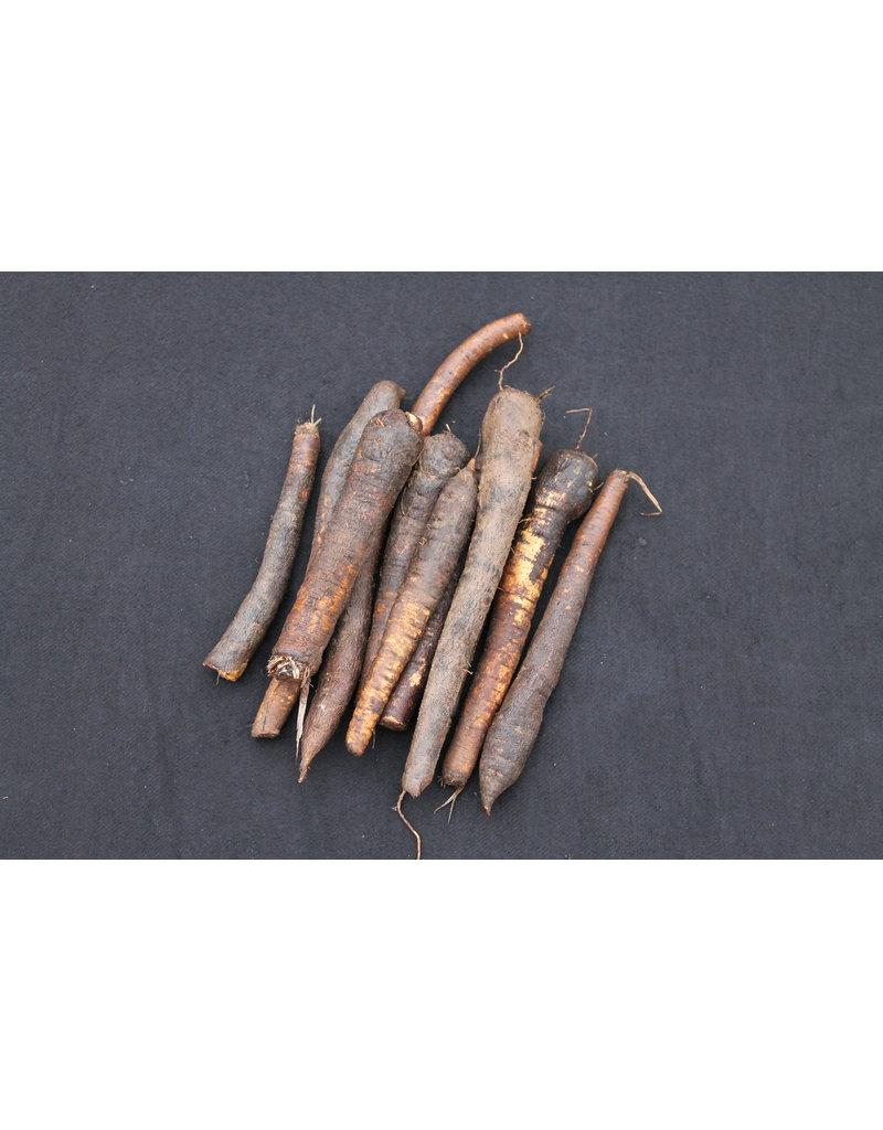Schwarzwurzel (Scorzonera hispanica)