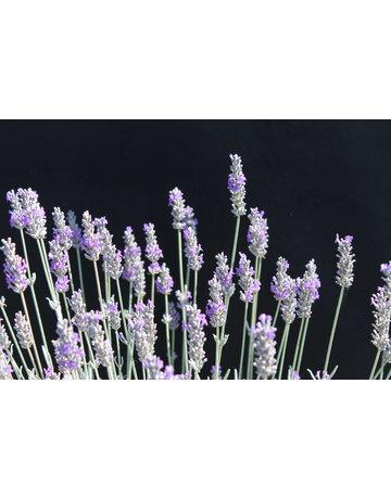 Silber-Lavendel