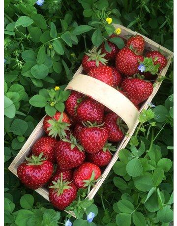 Gourmet-Erdbeere 'Hummi®-Herzle'