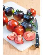 Blaue Tomate ´Indigo Rose´ - Lycopersicon esculentum