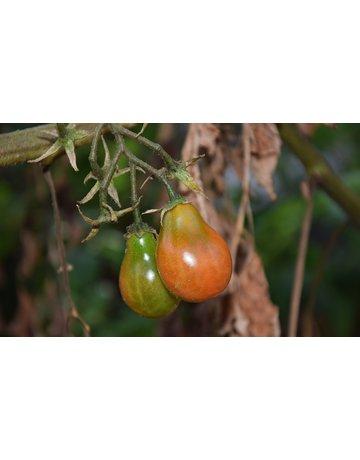 Rote Birnen-Tomate