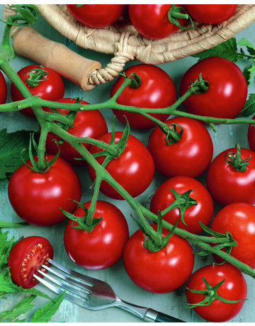 Cocktail-Tomate veredelt 'Picolino'