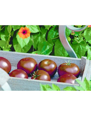 Tomate veredelt rund ´Kakao´ F1