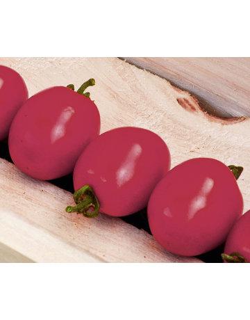 Pflaumen-Cherrytomate ´Mirado Red´