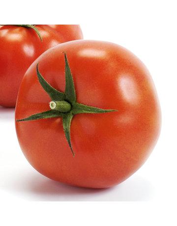 Große Fleisch-Tomate veredelt ´Imagine Maxi Red´