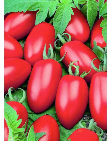Mini-San-Marzano-Tomate ´Caprese´