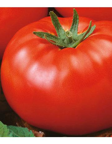 Fleisch-Tomate 'Myrto'