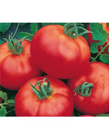 Fleisch-Tomate 'Master'