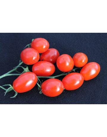 Pflaumen-Tomate 'Dasher'