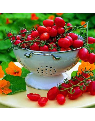 Pflaumen-Tomate veredelt 'Dasher'