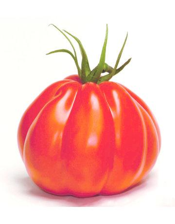 Ochsenherz-Tomate veredelt 'Corazon'