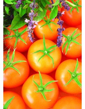 Carotin-Tomate veredelt 'Bolzano'