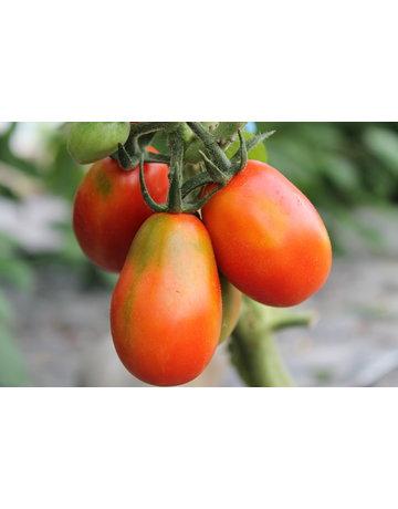 Tomate 'Baselbieter Röteli'