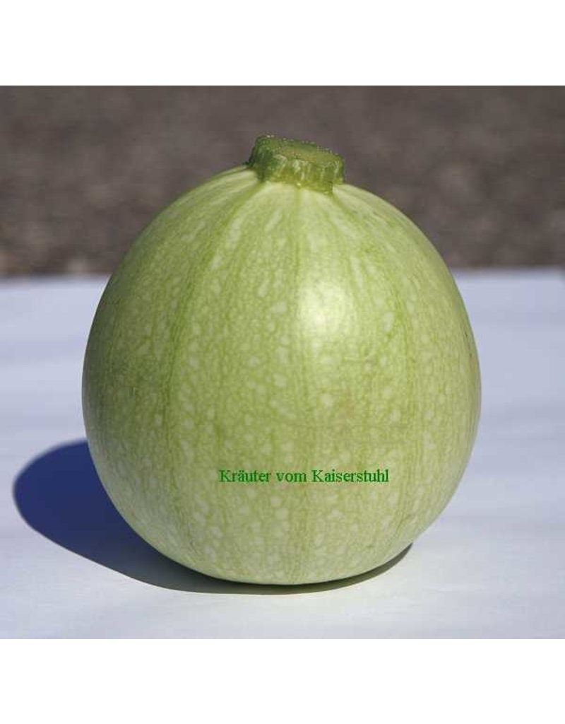 Cucurbita pepo ´Ice Ball´