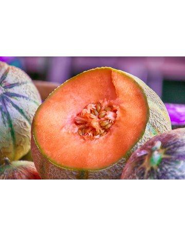 Zucker-Melone