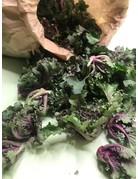 Flower Sprout - Brassica oleracea var. gemmifera
