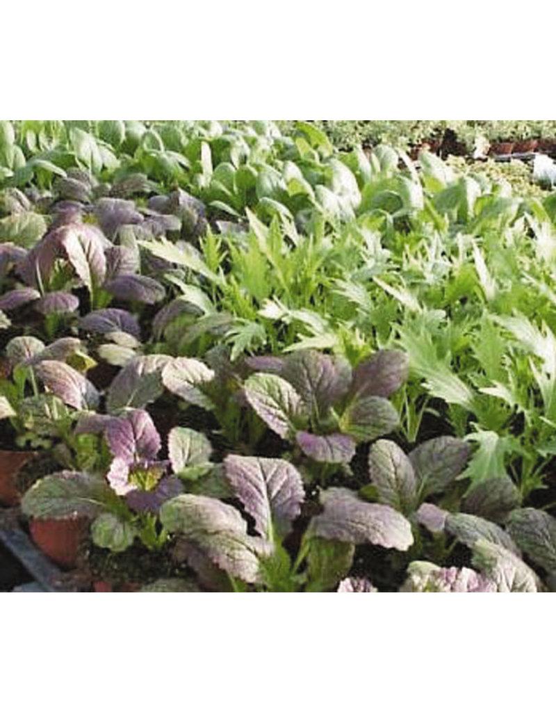Brassica campestris/B. juncea