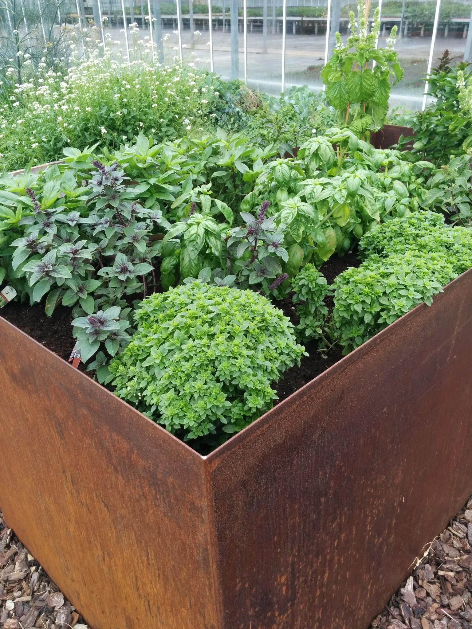 Ratgeber: Gemüse für Hochbeet, Balkon, Terrasse