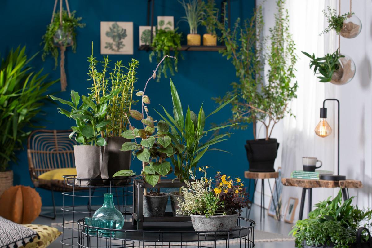 Indoor Kräuter: Kräuter als Zimmerpflanzen - geht das?