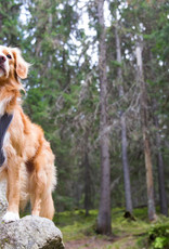 RukkaPets Harnas voor hond Comfort Air
