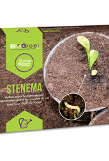 pest control : soil flies / Bibio lanigerus