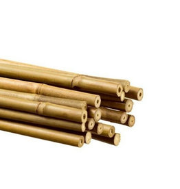 bamboo 60 cm
