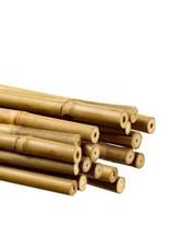 bamboo 180 cm