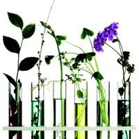 Essentiele Olie - Hoe werkt Aromatherapie?