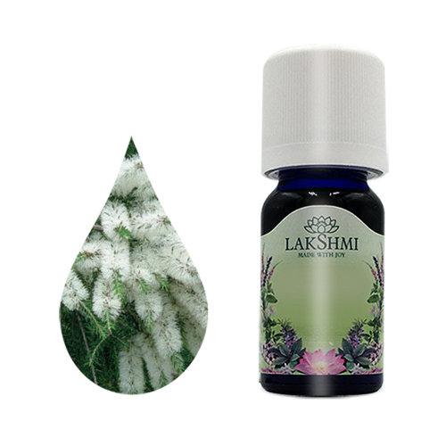 Lakshmi Tea Tree - Etherische Olie