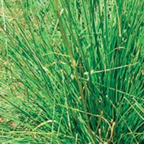 Lakshmi Vetiver (Indonesie, Trad.) - Etherische Olie