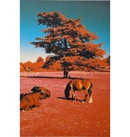 Gordon Trewinnard Gordon Trewinnard, Tree, Horse, and Cows