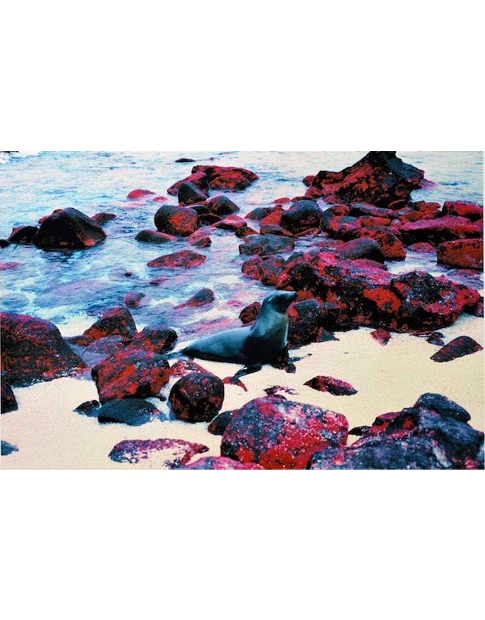 Gordon Trewinnard GordonTrewinnard, Seal, Galapagos Islands