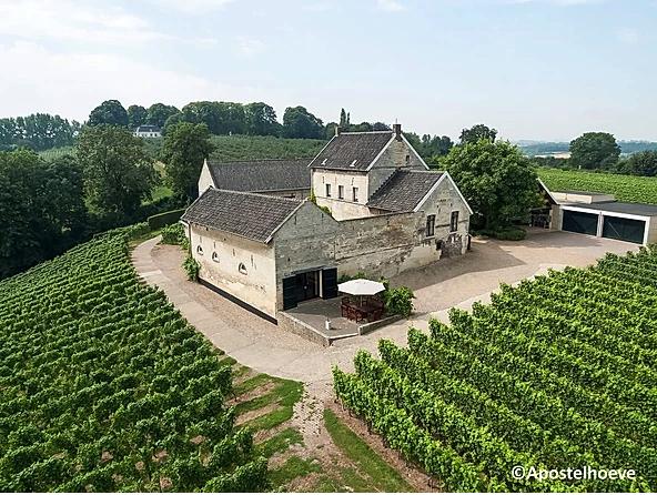 de zuidelijkste wijngaard van Nederland de Apostelhoeve