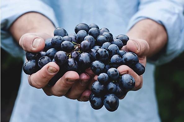 biologische wijndruiven