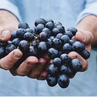Consument vraagt steeds meer om bio-wijnen
