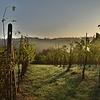 Wijnen uit italië